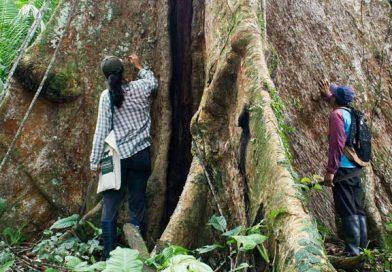 Sorprende a papá y regálale la protección de un gran árbol amazónico