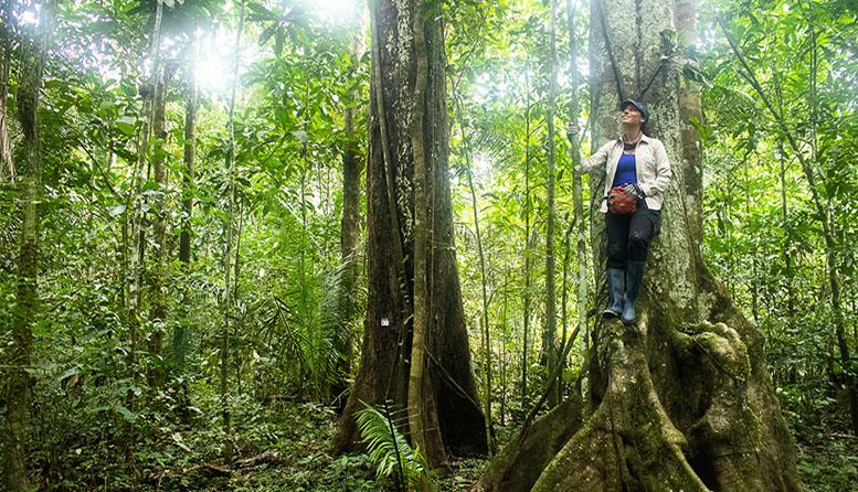 Día Mundial del Árbol: ¿por qué nos cuesta tanto valorar a los árboles?